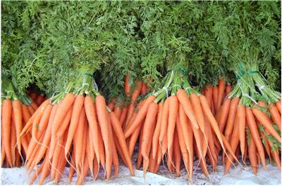 Carrot History - Origin and History of Carrots