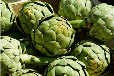 Artichoke Vegetable History