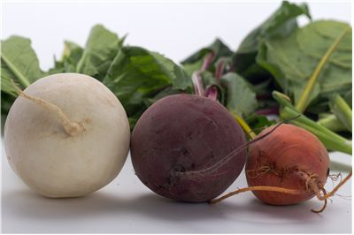 Beetroot Types