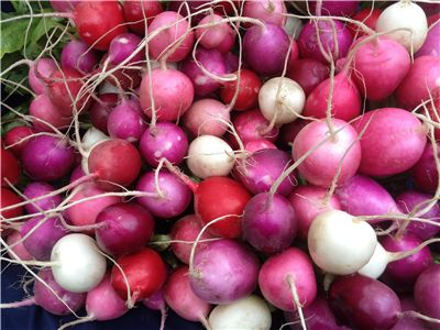 Radishes Healthy Vegetable