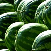Watermelons at Summer