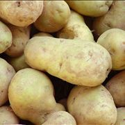 Potato Cultivars Vegetable
