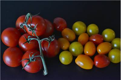 Tomato Different Types